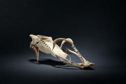 Vanity Shoes, la Souris