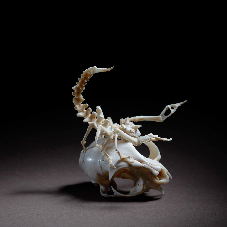 Amours éternels-Le scorpion