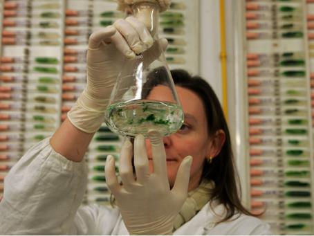 Creati super-cibi dalle proteine delle microalghe
