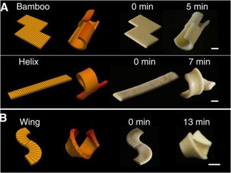 Pasta che diventa 3D, latte in laboratorio, caffè dagli scarti le nuove startup futuriste