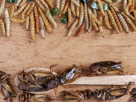 Allevare insetti: perché, quali e come?