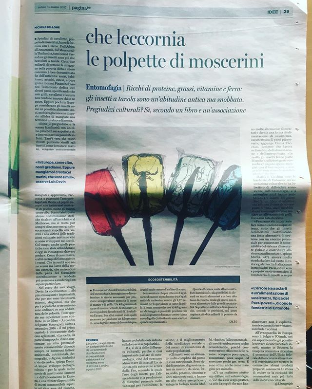 Su _pagina99 si parla di #insetticommestibili e di noi ♥️ • grazie a Michele Bellone 🙏🏻🐜👨🏻🍳 •
