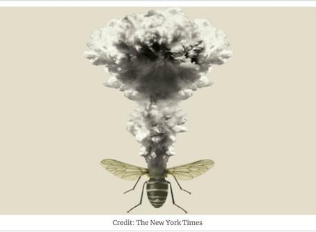 """Uno studio recente sfida il timore dell'""""apocalisse degli insetti"""""""