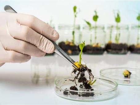 Il futuro del cibo in 75 tecnologie: dall'intelligenza artificiale agli insetti.
