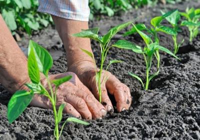 Per ridurre le emissioni va ripensato il sistema di produzione del cibo