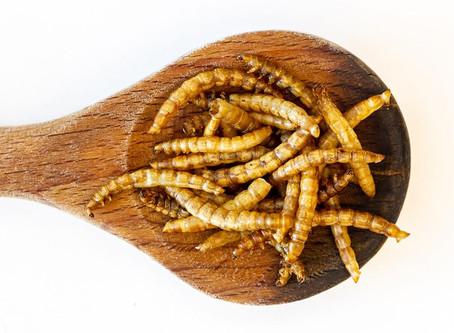 Un insetto su cui scommettere