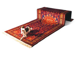 rug dog
