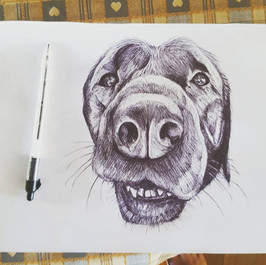 Realistic Dog drawing in biro (Time taken: 6 hours)