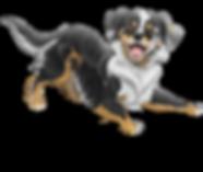 Soul Dog Training