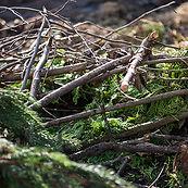 Baum&Strauchschnitt.jpg