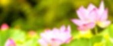 Lotus_edited_edited_edited_edited.jpg