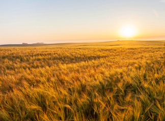 Alberta Wheat and Alberta Barley launch new mentorship and leadership program