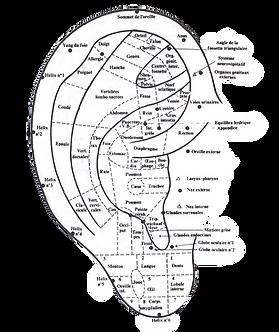 Dessin-oreille-Gramyna-illustration_auticulothérapie