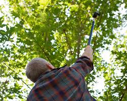 Be a Good Neighbor: Keep Trees Properly Trimmed
