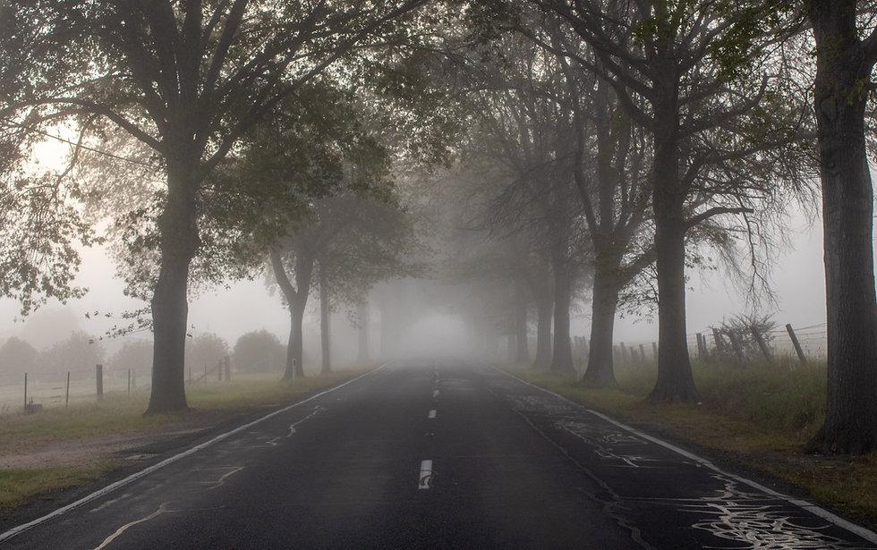 A Misty Avenue.jpg
