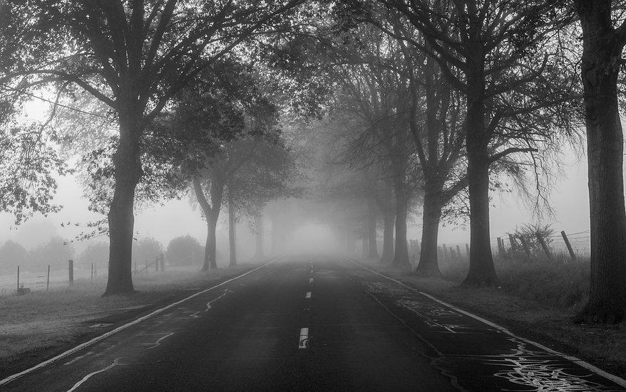 A Misty Avenue