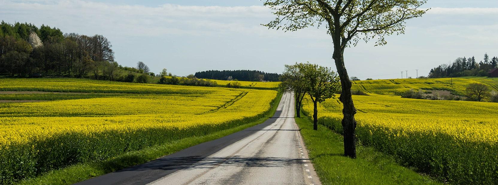 yellowfield-min