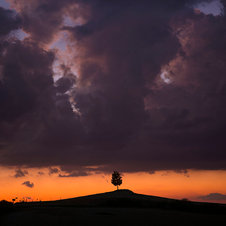 Sunset Tree, Val d'Orcia - Italie