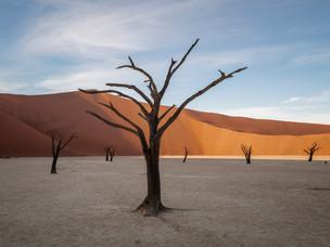 Deadvlei Thorn Trees, Namibia