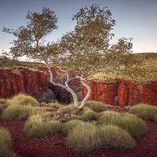 Knox Gorge Gum, Karijini - Australie occidentale