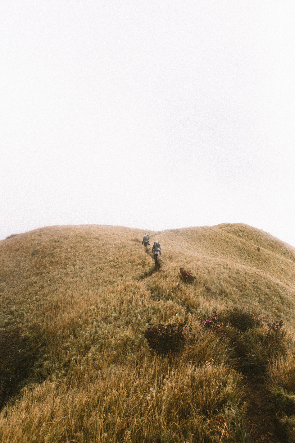 Mt. Pulag edited -0254.jpg