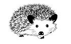 hedgehog-3730460_1920.png