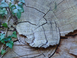 tree-3538257_1920