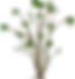plant-by OpenClipart-Vectors.png