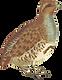 animal-1298891_1280.png