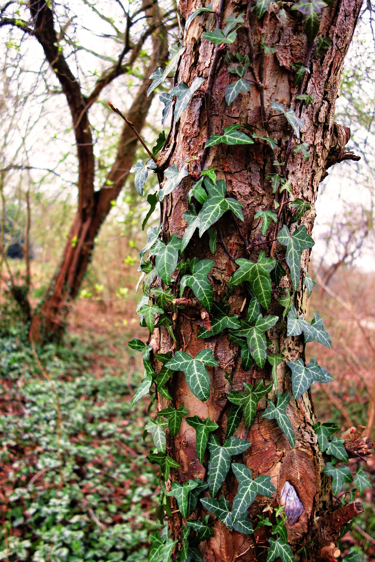 tree-trunk-3281959_1920