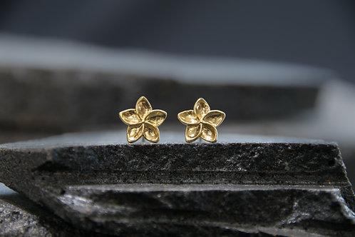 עגילים קטנים צמודים פרח הפיטנה / פלומריה