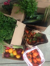 Fruit and Vegetable Donation