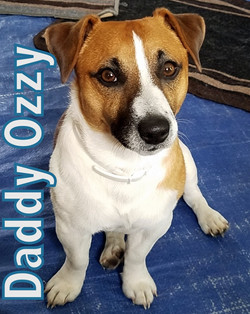 Ozzy Profile 2 20170515_095144-002
