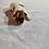 Thumbnail: Riley (Male) born 12/12/2020