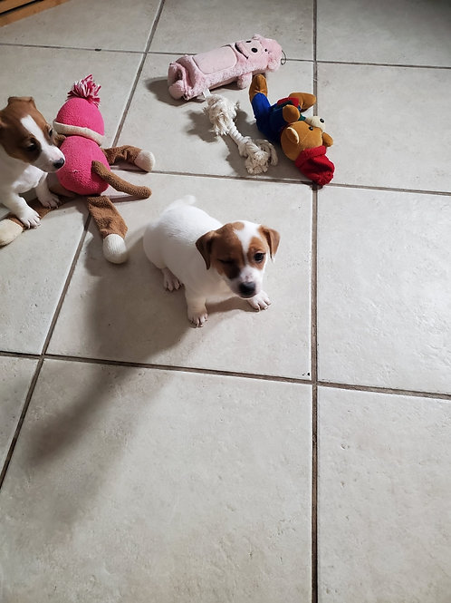 Zoey (female) 12/12/2019
