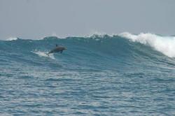дельфин в волне