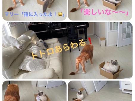 猫まんが2