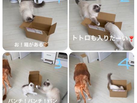 猫まんが🐈🐈