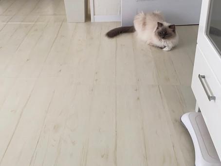 田宇二胡コンサートin札幌PR動画…と今日の猫たち🐈