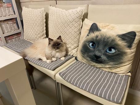 猫たち🐱🐈そして私