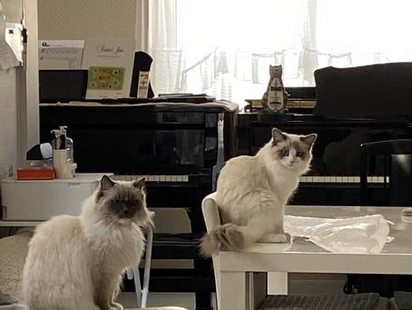 2月22日は猫の日🐱