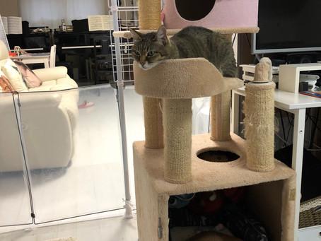 犬猫タワー