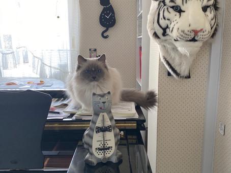 猫 猫 猫 🙀
