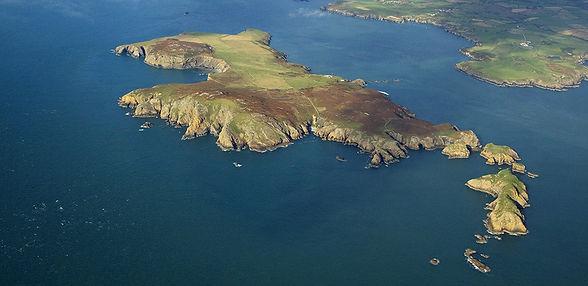 ramsey island boat trips seabirds seals