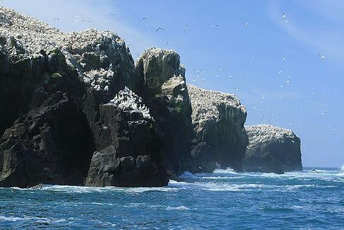 Grassholm Island RSPB Nature Reserve gan