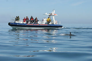 Dolphin watching boat trips Pembrokeshir