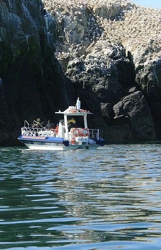 Grassholm Island gannet colony jet boat