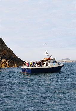 Wildlife boat trips around ramsey island