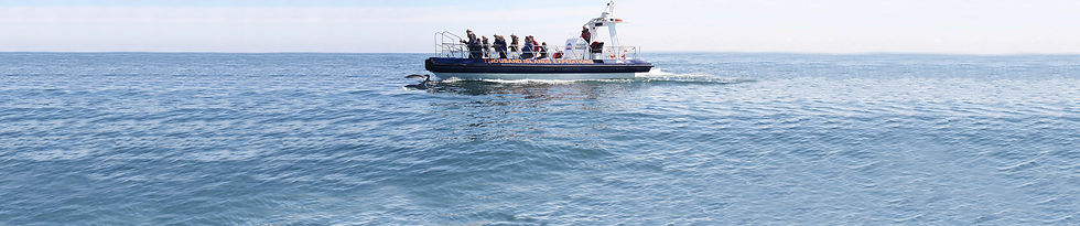 whale and dolphin watching jet boat trip