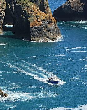 Boat trips around Ramsey Island wildlife